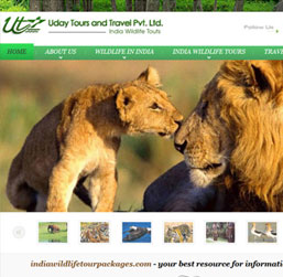 Wildlife Tours Website design